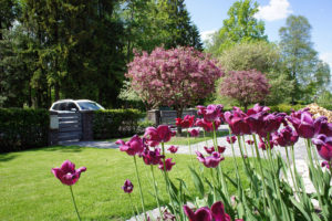 Aiakujundus projekt, aiaplaan
